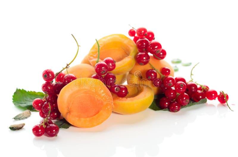 Abricots mûrs et savoureux avec les groseilles rouges et les feuilles en bon état sur un fond blanc images libres de droits