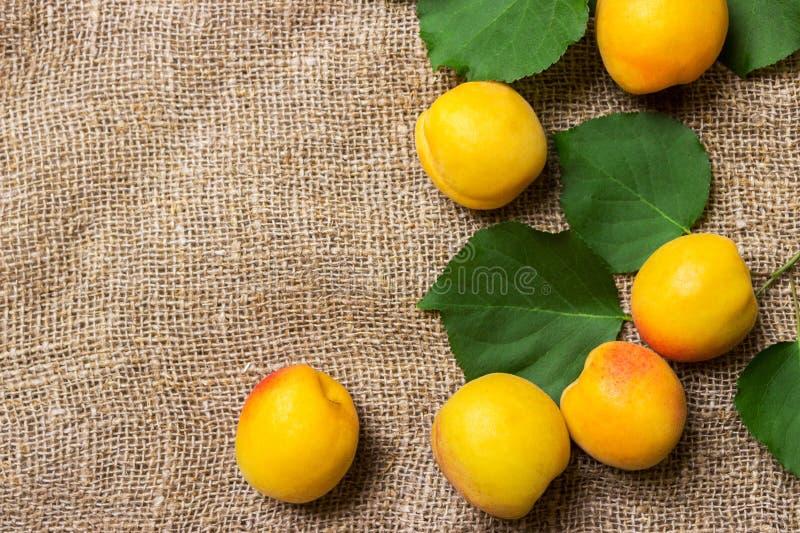 Abricots organiques avec des feuilles sur renvoyer le fond images libres de droits