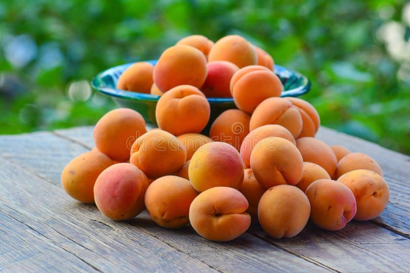 Download Abricots organiques frais image stock. Image du normal - 56487773