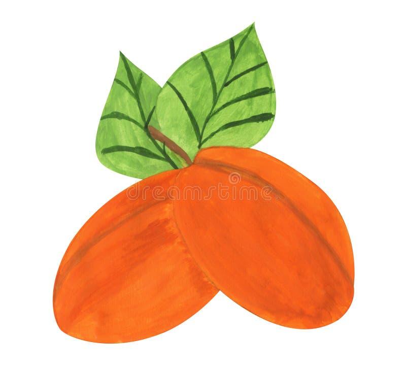 Abricots, peinture de gouache illustration stock