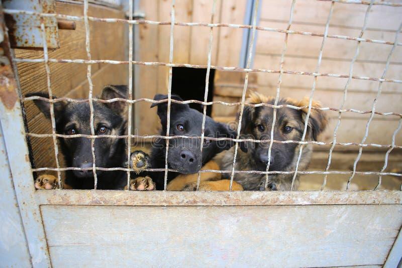 Abrigo animal Casa do embarque para cães fotos de stock