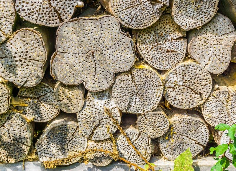 Abrigo da casa do inseto na textura do fundo do tronco de árvore foto de stock royalty free