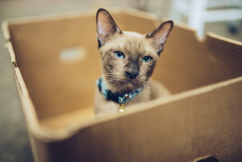 Abrigo do animal de estimação, gato na caixa fotos de stock