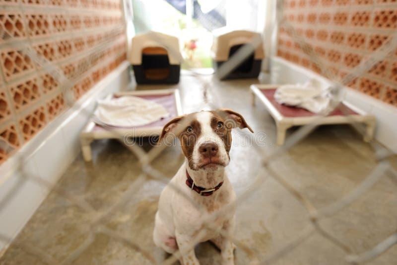 Abrigo do cão foto de stock royalty free