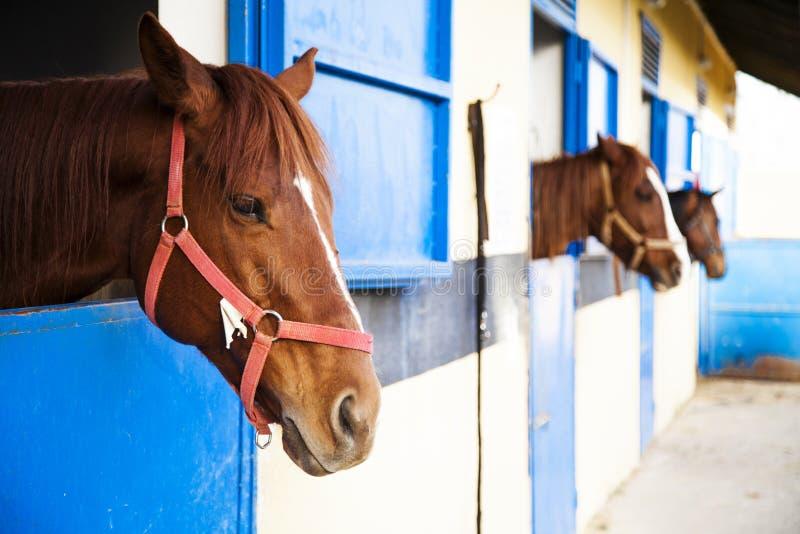 Abrigo do cavalo, celeiro Onde os cavalos são aumentados e mantidos fotografia de stock
