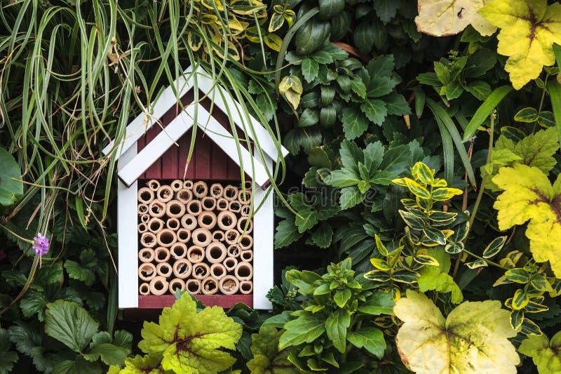 Abrigo do inseto entre plantas de jardim imagem de stock