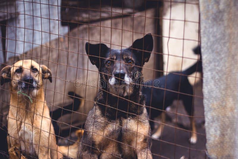 Abrigo para cães desabrigados imagem de stock