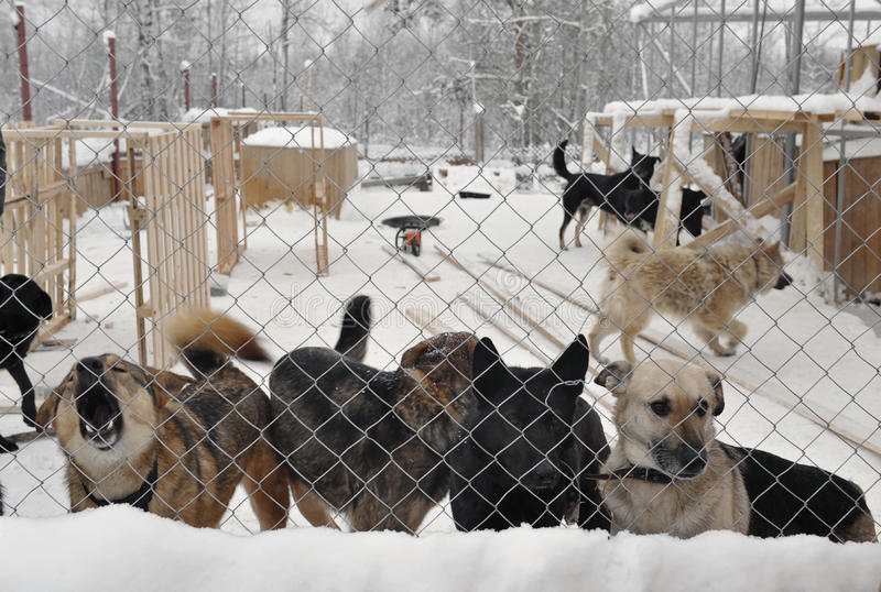 Abrigo para cães dispersos imagens de stock
