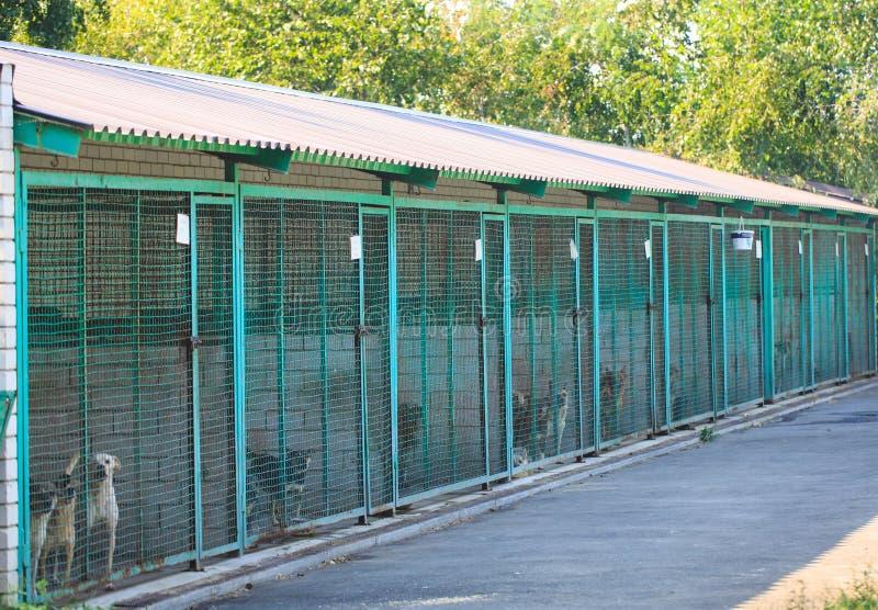 Abrigo para c?es dispersos Abrigo da rua para animais desabrigados imagens de stock royalty free