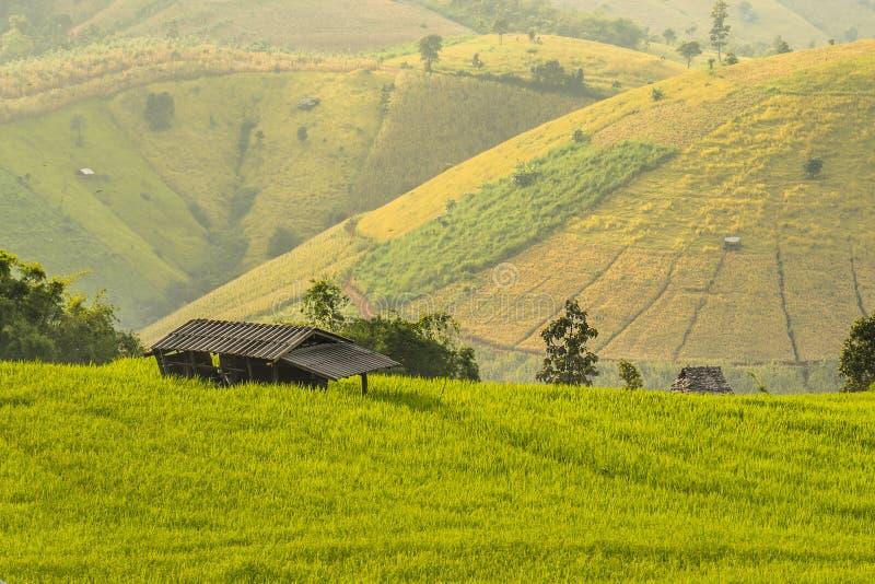 Abrigo pequeno no terraço do arroz foto de stock royalty free
