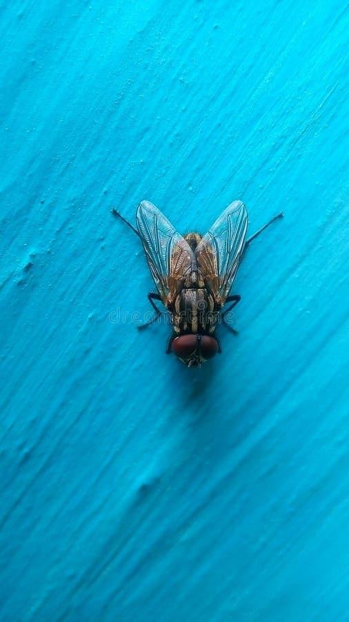 Abrigue a mosca foto de stock royalty free
