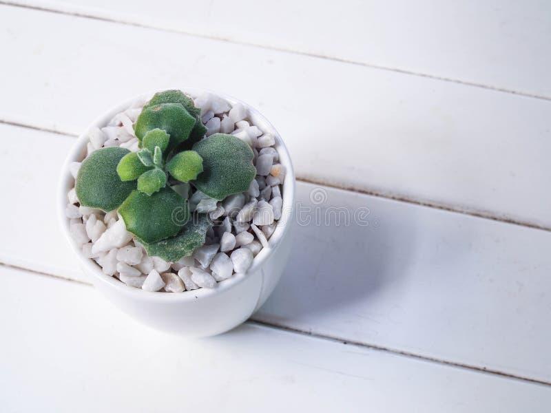 Abrigue a planta em um potenciômetro cerâmico em um fundo de madeira imagem de stock