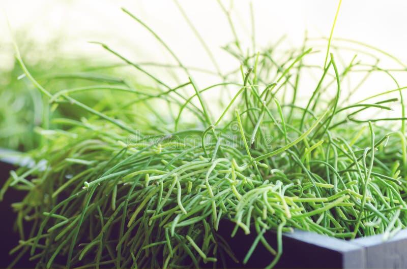 Abrigue plantas, grama, verdes perto da janela Estilo de vida do design de interiores da sala de visitas ou do café, restaurante, imagem de stock