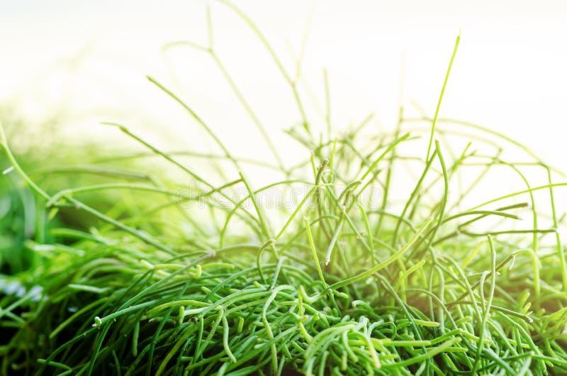 Abrigue plantas, grama, verdes perto da janela Estilo de vida do design de interiores da sala de visitas ou do café, restaurante, imagens de stock
