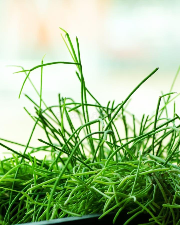 Abrigue plantas, grama, verdes perto da janela Estilo de vida do design de interiores da sala de visitas ou do café, restaurante, fotografia de stock royalty free