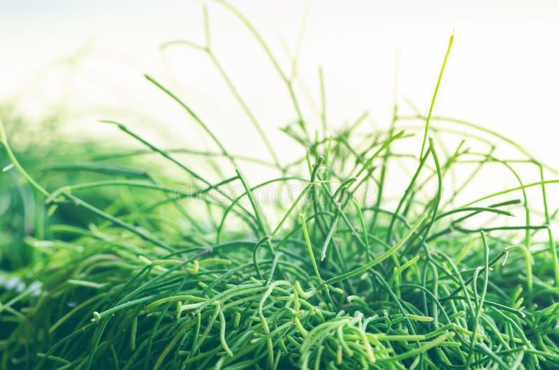 Abrigue plantas, grama, verdes perto da janela Estilo de vida do design de interiores da sala de visitas ou do café, restaurante, imagens de stock royalty free