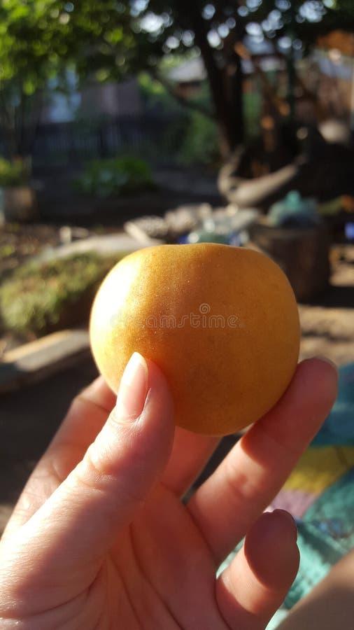 abrikoos stock afbeelding