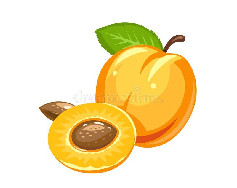 abrikoos Rijp sappig fruit met noot en blad stock illustratie