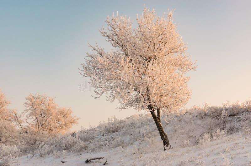 Abrikozenboom op een heuvel bij wintertijd royalty-vrije stock fotografie
