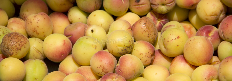 Abrikozenfruit stock foto's