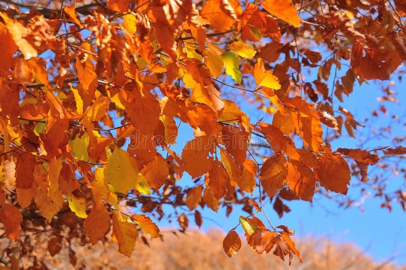 Abruzzo Fall Foliage royalty free stock photos