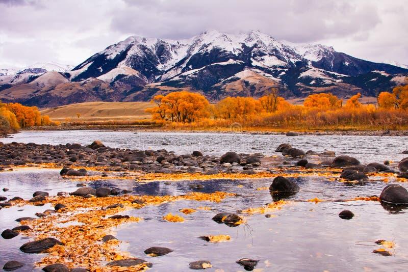 absarokabergflod yellowstone arkivbild