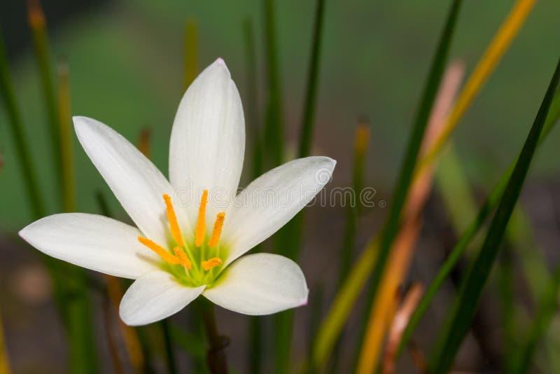 Abschluss der weißen Blume oben lizenzfreies stockbild