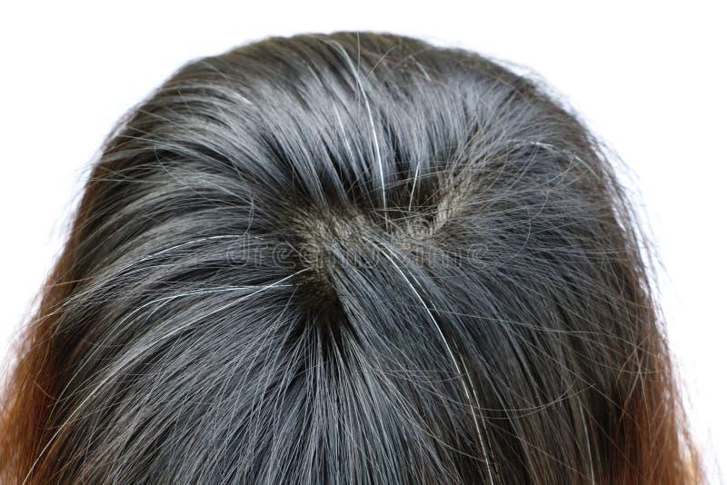 Abschluss herauf Asiatinkopf haben weißes Haar stockfotos