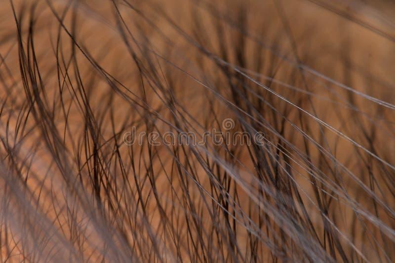 Abschluss herauf das männliche Haarkopfteil kahl lizenzfreies stockbild