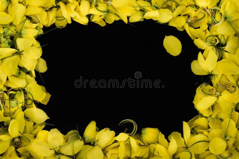 Abschluss herauf gelbe Blume der Rahmennatur auf schwarzer Hintergrund wallpeper Beschaffenheit stockfotos