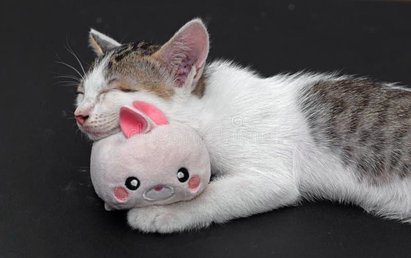 Abschluss herauf kleine nette Kitten Sleeping mit Kaninchen-Puppe lizenzfreies stockbild