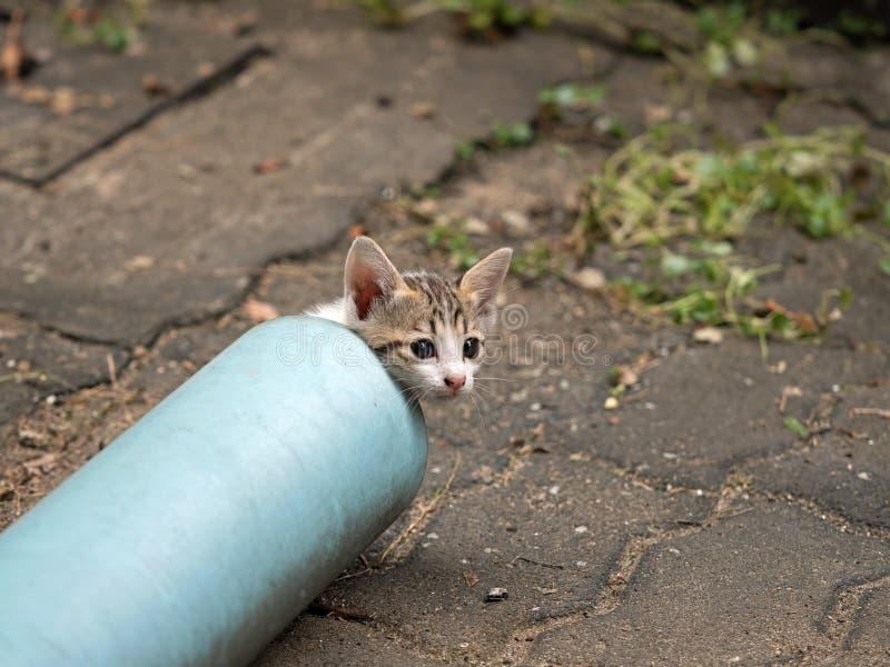 Abschluss herauf nette kleine Kitten Emerge von der blauen Wasserleitung lizenzfreie stockfotografie