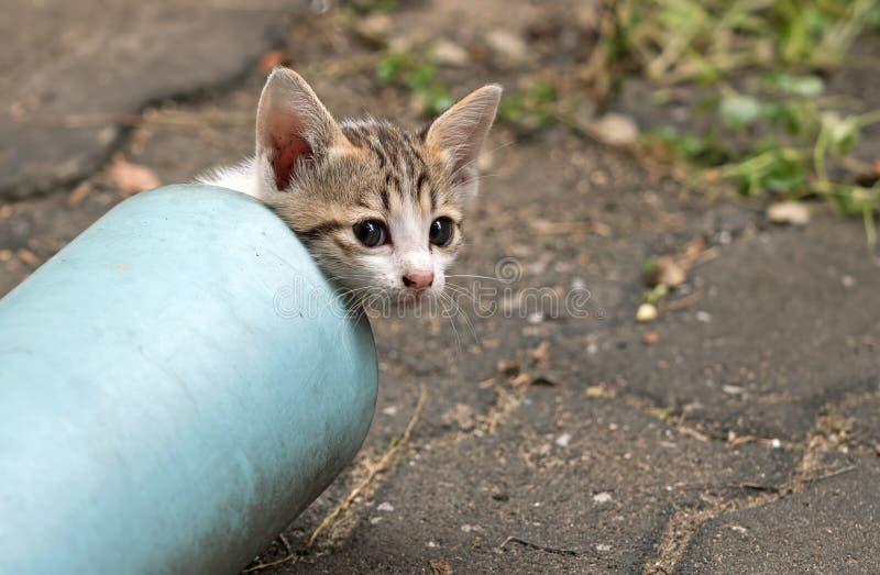 Abschluss herauf nette kleine Kitten Emerge von der blauen Wasserleitung stockfoto