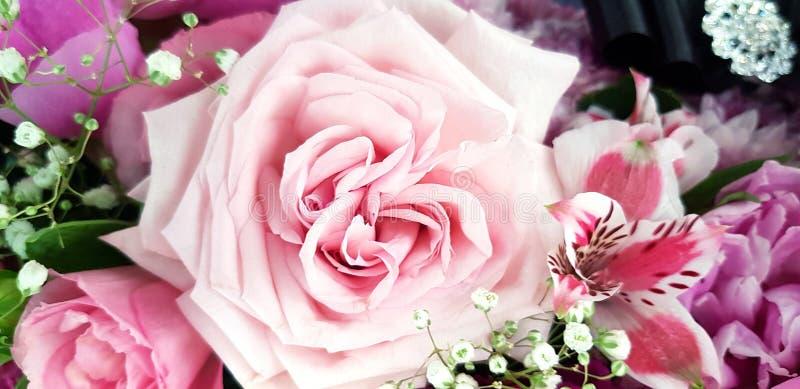 Abschluss herauf schöne rosa Rose mit einer anderen Blume für Hintergrund stockfotos