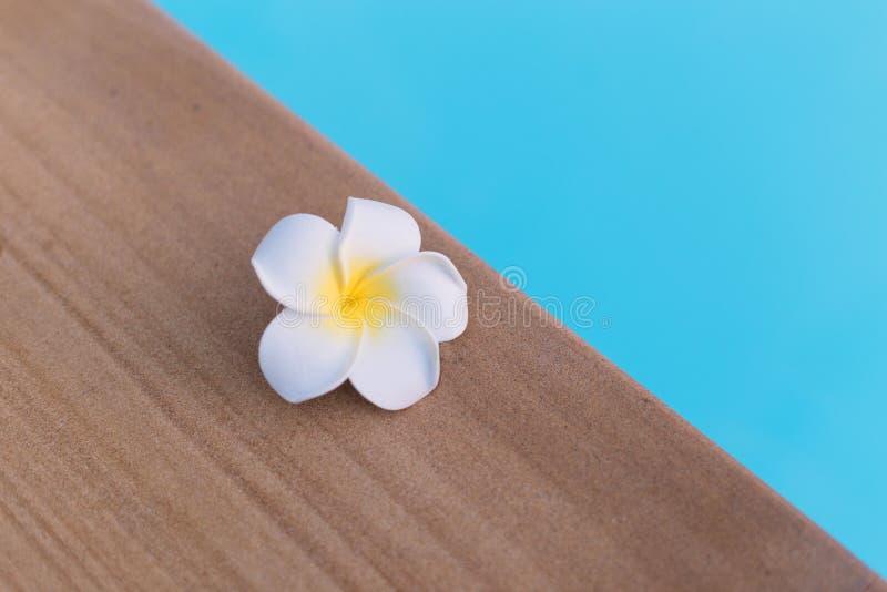 Abschluss herauf wei?e Plumeriablume auf dem Poolrand stockfotografie