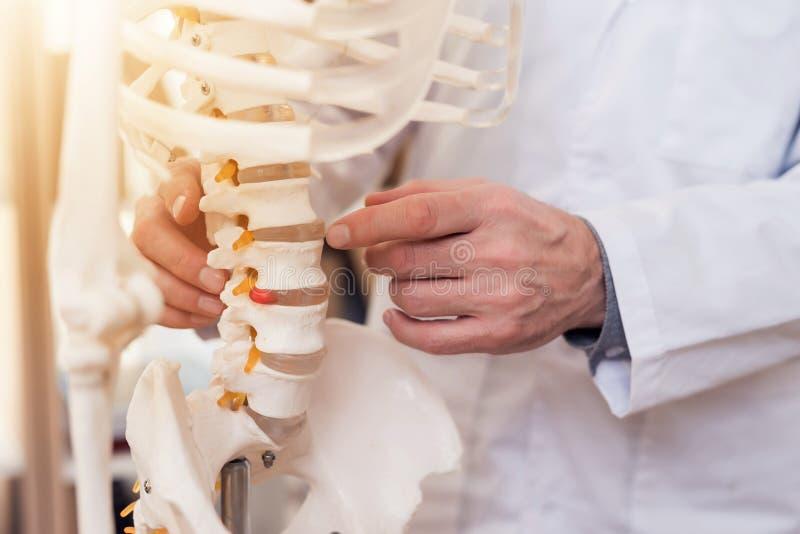 Abschluss oben Doktor zeigt Wirbel auf Skelett stockbild