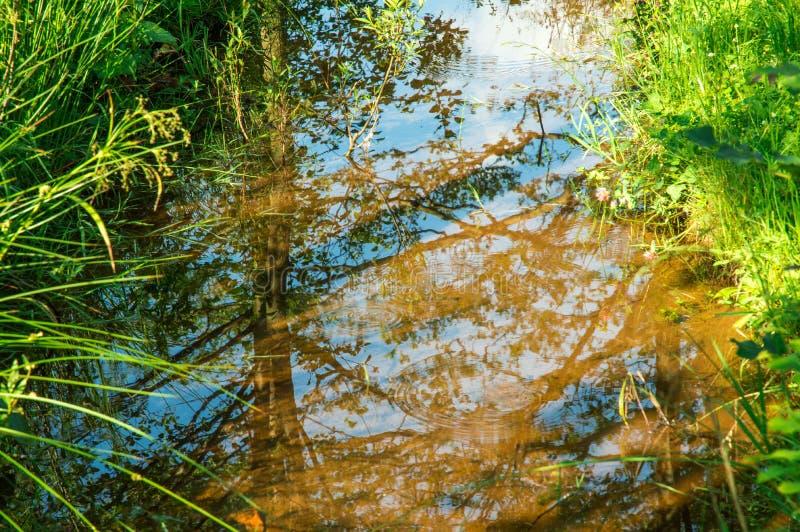 Abschluss oben Malerischer Nebenfluss, umgeben durch Wiesengräser In der Reflexion können Sie den blauen Himmel sehen stockbilder