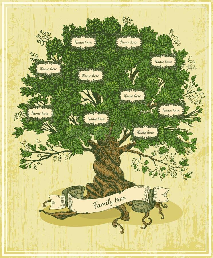 Abstammungsbaum auf altem Papierhintergrund stock abbildung