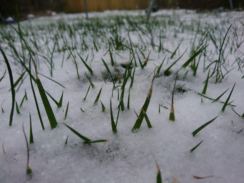 Abstauben des Schnees lizenzfreies stockbild