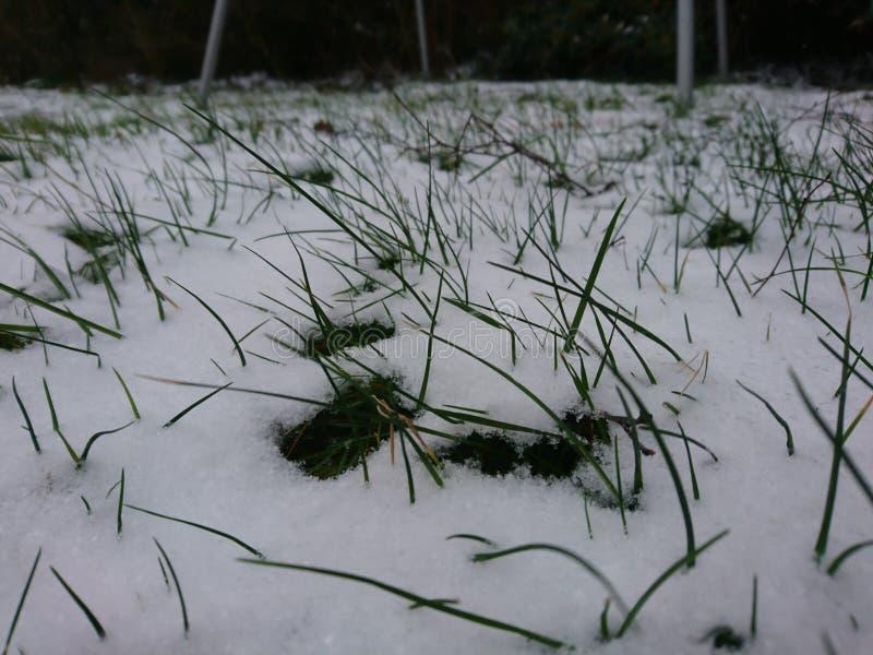 Abstauben des Schnees stockfoto