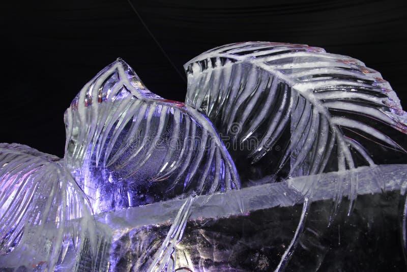 Abstração do gelo no fundo preto fotografia de stock royalty free