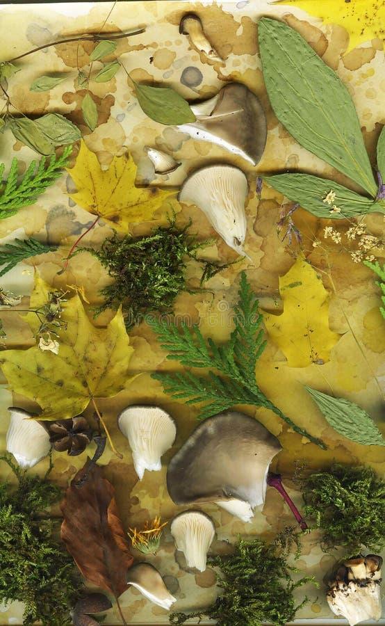 Abstração do outono imagens de stock