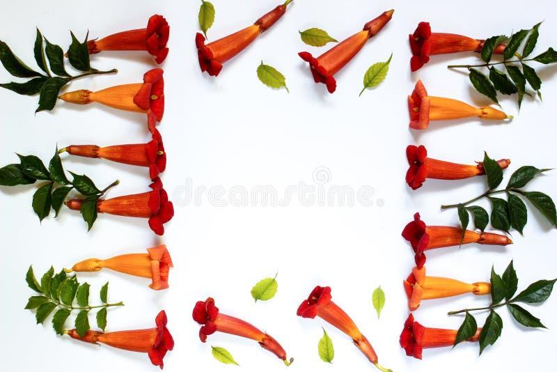 A abstração sob a forma de um quadro de flores vermelhas pequenas com verde sae em um fundo branco fotografia de stock royalty free