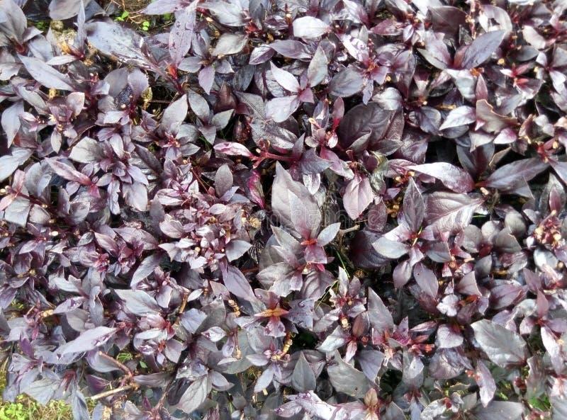 Abstrac garden. Abstrac mozaic in the garden royalty free stock photo