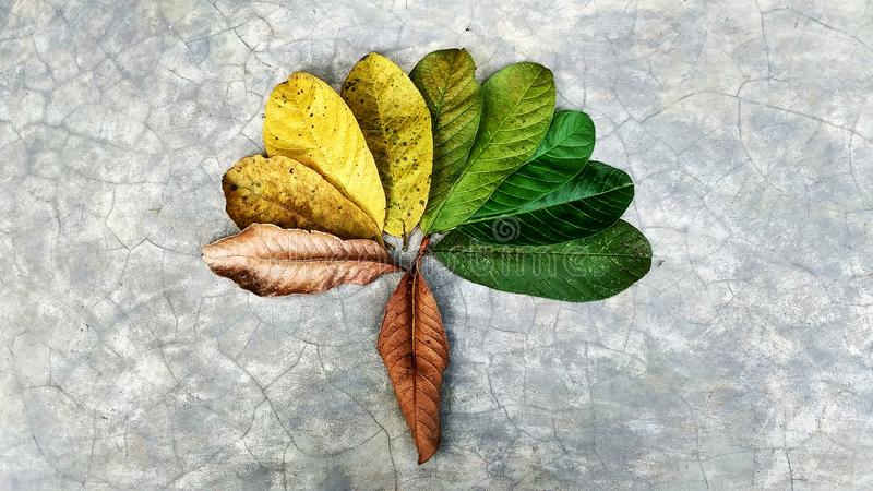 Abstrack Leaf in gradient color royalty free stock photo