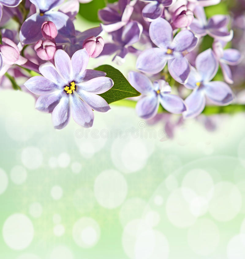 Abstrackt background with with lilacs for greetings Happy Valentine or wedding in pastel colors with effect bokeh and sparkles. (March 8, February 14, Easter royalty free stock photo