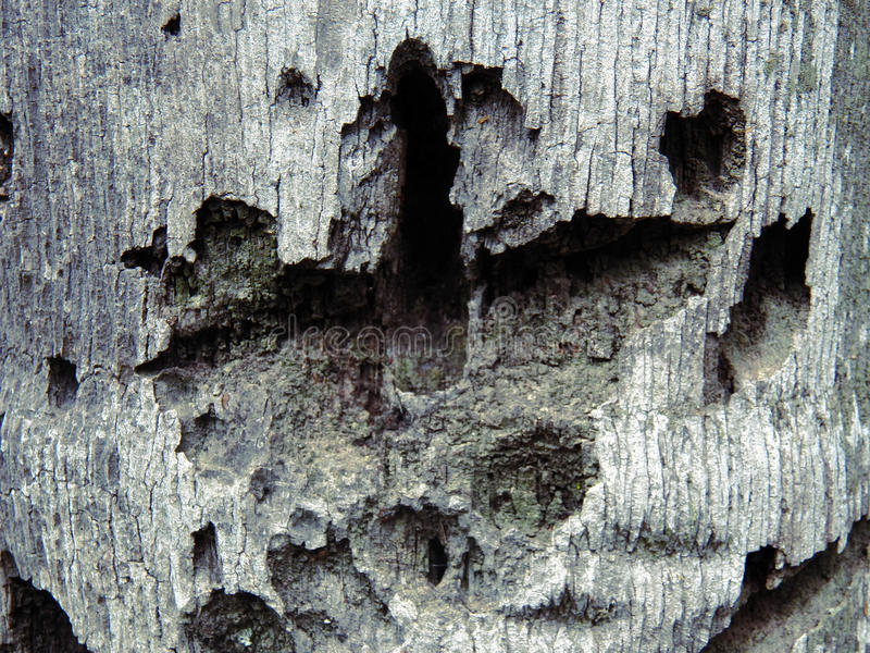 Abstract. Abstrac wood. Grunge and holes in the surface royalty free stock image