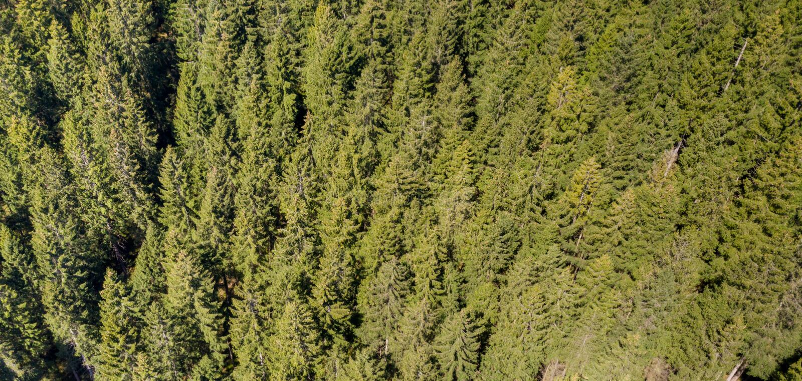 Abstract aerial photograph of a coniferous forest on a mountain slope in the Harz Mountains. Background stock images
