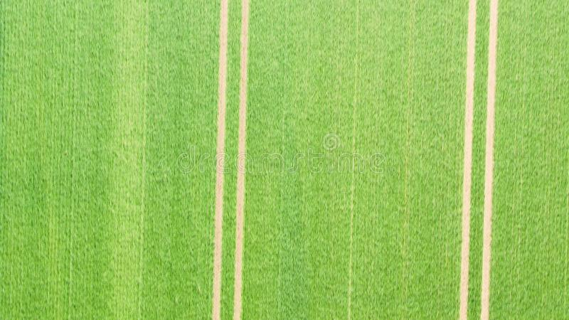Abstract aerial photograph of two parallel furrows. Drawn by a tractor on a field overgrown with young green wheat plants royalty free stock photos