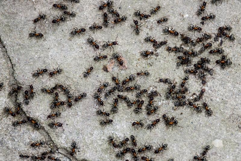 Abstract ants. Above working contrast concrete nikon d610 tamron 70-210 manastirea saon royalty free stock photos